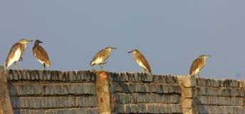 Riunione degli uccelli Fotografia Stock Libera da Diritti