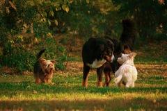 Riunione del cane fotografie stock