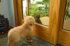 Riunione del gatto e del cane Fotografia Stock