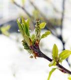Riunione dell'inverno e della primavera 4 immagini stock libere da diritti