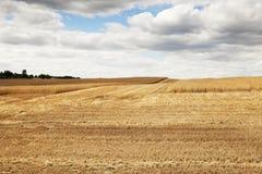 Riunire il raccolto del grano Immagini Stock