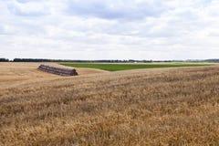 Riunire il raccolto del grano Fotografie Stock