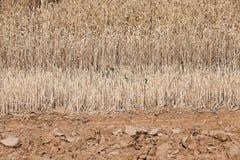 Riunire il raccolto del grano Fotografia Stock