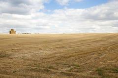 Riunire il raccolto del grano Fotografie Stock Libere da Diritti