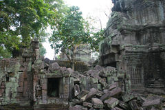 Riuns of Angkor Wat temple Ta Phrom Royalty Free Stock Photos