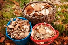 Riuscita caccia del fungo nella foresta di autunno Immagine Stock