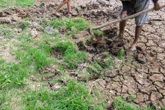 Riuscito agricoltore Fotografia Stock