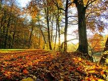 Riva in autunno Fotografia Stock