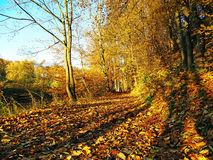 Riva in autunno Immagine Stock