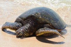 Riva baciante della tartaruga di mare Fotografia Stock