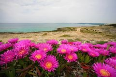 Riva Bella blisko Gallipoli, Włochy, Puglia obrazy royalty free