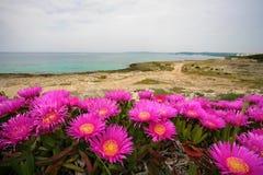 RIva Bella nära Gallipoli, Italien, Puglia royaltyfria bilder