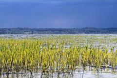 Riva con la canna sul paesaggio di estate della priorità alta Fotografie Stock Libere da Diritti
