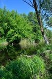 Riva del fiume Immagine Stock