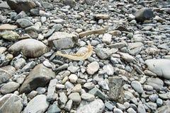 Riva del fiume in Austria con i denti dei cervi immagine stock libera da diritti