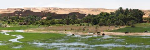 Riva del fiume del Nilo Fotografie Stock Libere da Diritti