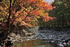Riva del fiume di stagione di autunno Fotografia Stock