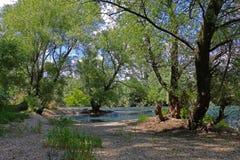 Riva del fiume ghiaiosa con gli alberi Fotografia Stock