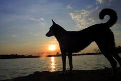 Riva del fiume tailandese del cane al tramonto immagini stock libere da diritti