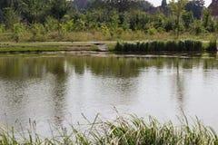 Riva del lago con erba ed il prato fotografia stock