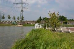 Riva del lago con l'albero ad alta tensione Immagine Stock Libera da Diritti