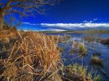 Riva del lago e canna asciutta Fotografie Stock