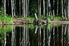 Riva del lago forest Immagini Stock Libere da Diritti