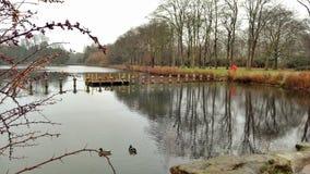 Riva del lago Nottingham di riflessione dell'acqua immagine stock libera da diritti