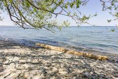 Riva del lago Ontario con un ceppo dell'albero fotografia stock