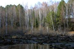 Riva del lago wetland Fotografie Stock
