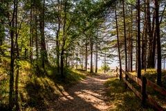 Riva del Mar Baltico in Lettonia Fotografia Stock Libera da Diritti