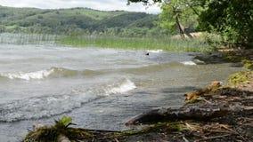 Riva del vulcano del lago Laach nella regione Germania di Eifel stock footage