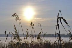 Riva dell'erba di inverno fotografie stock