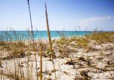 Riva di mare su una spiaggia selvaggia di estate fotografia stock