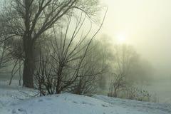 Riva di Snowy del lago nella nebbia Fotografie Stock