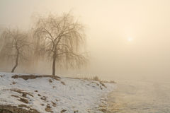 Riva di Snowy del lago nella nebbia Immagini Stock