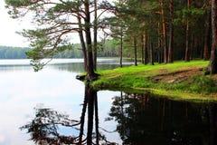 Riva di un lago della foresta fotografie stock