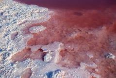 Riva di un lago di sale con acqua rossa Immagine Stock Libera da Diritti