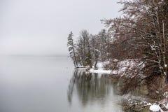 Riva innevata di inverno di bello lago Bohinj fotografia stock libera da diritti