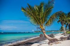 Riva sabbiosa dell'Oceano Atlantico La palma piegata si sviluppa sulla riva fotografie stock libere da diritti