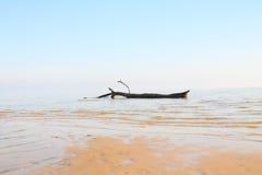 Riva surreale del lago Fotografia Stock Libera da Diritti