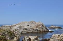 Rivage au point Lobos Photos libres de droits