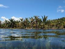 Rivage avec des arbres de noix de coco Photographie stock