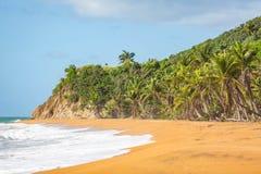 Rivage Culebra Puerto Rico de bord de la mer de plage de flamenco photo libre de droits