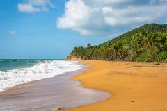 Rivage Culebra Puerto Rico de bord de la mer de plage de flamenco image libre de droits