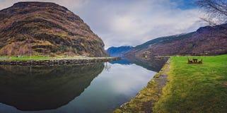 Rivage de Flam, entrée vers les fjords norvégiens image stock