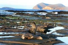 Rivage de Galapagos Photo libre de droits
