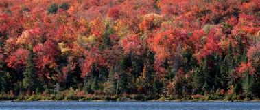 Rivage de l'algonquin d'automne Photographie stock