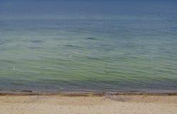 Rivage de la mer baltique et des mouettes Photographie stock