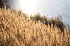 Rivage de lac Image libre de droits